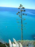 五乡地国家公园意大利 免版税库存图片