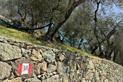 五乡地,利古里亚 在橄榄树中的一条道路 库存图片