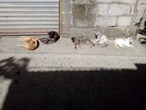 五只不同颜色猫 库存照片