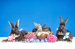 五只兔子和复活节篮子 免版税库存图片