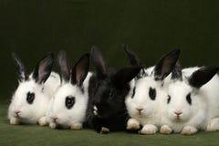 五只兔子 库存照片