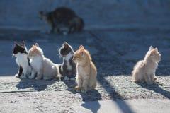 五只无家可归的小猫和母亲猫在具体码头在海por 库存照片