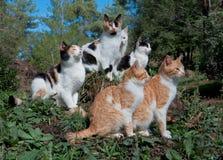 五只猫坐草坪 免版税库存图片