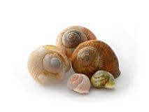 五只蜗牛的巧克力精炼机 库存照片