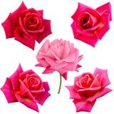 五朵桃红色玫瑰拼贴画  免版税库存图片