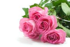 五朵桃红色玫瑰 库存图片