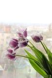五朵花粉红色 库存照片