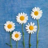 五朵雏菊花的构成在牛仔布的 免版税库存图片