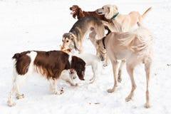 五条狗见面 免版税库存图片