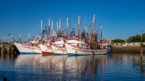 五条虾小船在岩石点港口,墨西哥 免版税库存照片