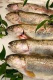 五条鳟鱼 免版税库存图片