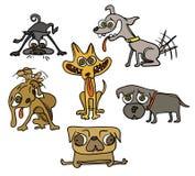 五条滑稽的狗 库存图片