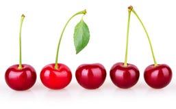 五棵成熟樱桃行  免版税库存照片