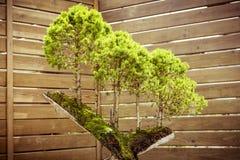 五棵盆景树 库存照片