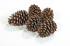 五自然棕色松树锥体样式和纹理 库存图片