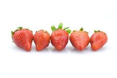 五草莓 免版税库存图片