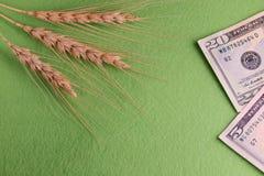 五谷和金钱 三个麦子头和二十五美元美国 概念腐败在农业领域, purcha 免版税图库摄影