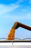 五谷处理。五谷木钻装货麦子到在收获的卡车里 免版税库存照片