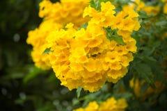 五颜六色一朵黄色花,当绽放,自然本底纹理时 免版税库存照片
