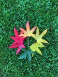 五颜六色叶子 库存照片