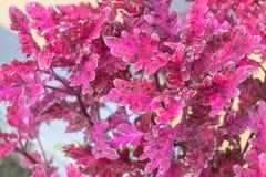 五颜六色和充满活力的装饰植物离开创造好的背景 免版税图库摄影