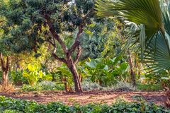 五颜六色和异乎寻常的场面frome马拉加中央parque 免版税图库摄影