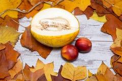 五颜六色和明亮的秋季背景,秋叶,在破旧的白色木背景用瓜和油桃 秋天conce 免版税库存图片