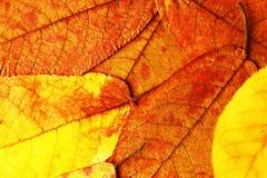 五颜六色和明亮的背景由下落的秋叶做成 图库摄影
