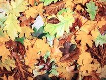 五颜六色和明亮的背景由下落的秋叶做成 免版税库存照片