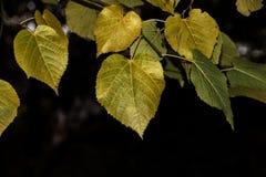 五颜六色和明亮的背景由下落的秋叶做成 免版税库存图片