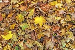 五颜六色和明亮的背景由下落的秋叶做成 库存照片