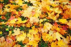 五颜六色和明亮的背景由下落的秋叶做成 库存图片
