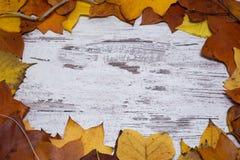 五颜六色和明亮的背景,秋叶,在破旧的白色木背景 秋天概念查出的白色 库存照片