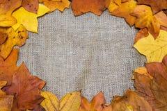 五颜六色和明亮的背景,秋叶,在麻袋布背景 秋天概念查出的白色 库存照片