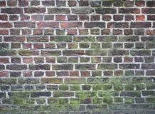 五颜六色和生苔砖墙纹理 免版税库存照片