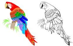 五颜六色和黑白样式鹦鹉 免版税图库摄影