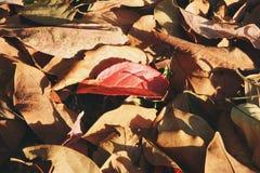 五颜六色在一个森林里烘干在一棵草的叶子在秋天晴天 免版税库存图片