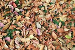 五颜六色在一个森林里烘干在一棵草的叶子在秋天晴天 库存图片