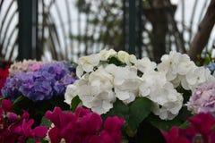 五颜六色在地面上的花在雨以后 库存照片