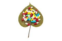 五颜六色在干燥菩提树叶子榕属religiosa L的药片 天竺菩提树, Bohhi树,道树,在白色背景的Peepul 免版税库存照片