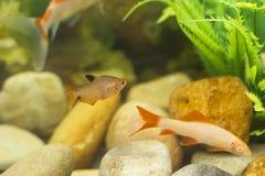 五颜六色在水族馆的鱼特写镜头  免版税库存图片