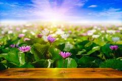 五颜六色开花在水和木头桌的荷花或莲花在庭院,泰国里 与迷离的有选择性和软的焦点 免版税库存图片