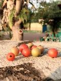 五颜六色樱桃 免版税库存图片