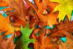 五颜六色橡木的叶子和的橡子 库存照片