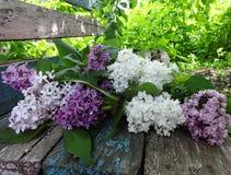 五颜六色的丁香花束在一个老长木凳的 免版税库存图片