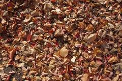 五颜六色的下落的叶子在11月从上面 库存图片