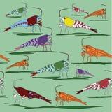 五颜六色的不同的种类在水族馆样式的虾 免版税库存图片