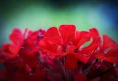 五颜六色的与浅DOF的花宏观照片 库存照片