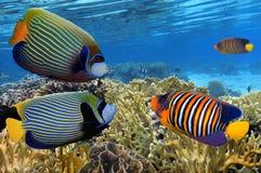 五颜六色的与鱼和珊瑚的礁石水下的风景 免版税库存照片