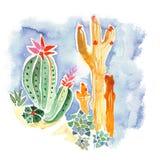五颜六色的仙人掌和多汁植物手拉的水彩 皇族释放例证
